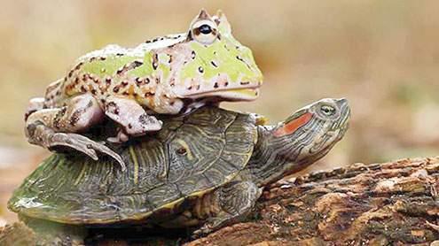 Khawab Mein Kachwa Ya Mendak Dekhna / Seeing A Turtle Or Frog In The Dream
