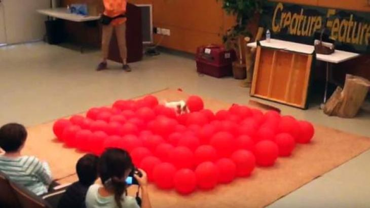 Happiest dog breaks World Record by popping 100 balloons less than 40 seconds