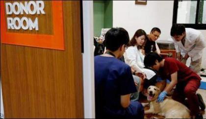 Taiwan establishes Dog's Blood bank