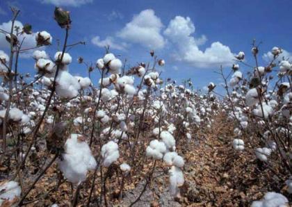 Spot rates of cotton (Crop 2015-2016)