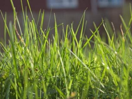 Citizens facing problems due to wild bushes, grass
