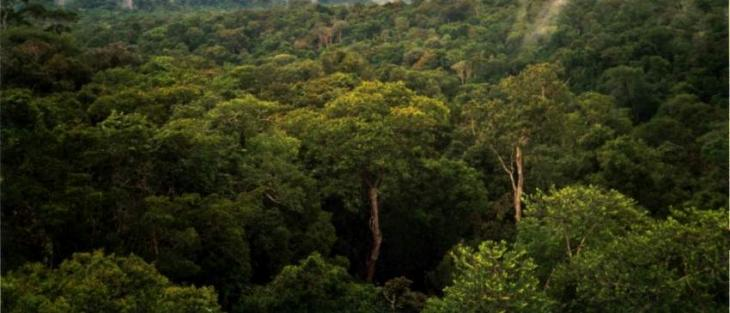 It will take three centuries to enlist trees in Amazon's forests, experts