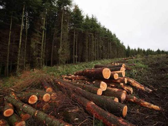 Ban imposed on cutting trees