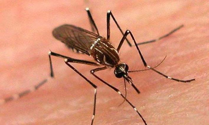 Two held in drive against dengue