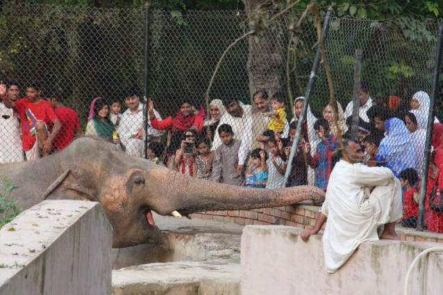 Punjab, Sindh Govts to be approached for surplus animals for Peshawar Zoo: Secretary Environment