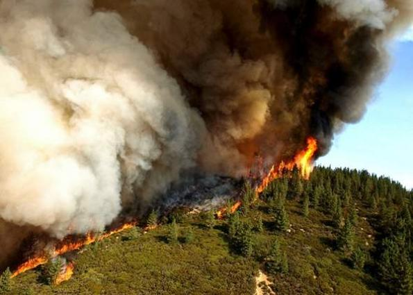 California Forest is engulfed by devastating fire