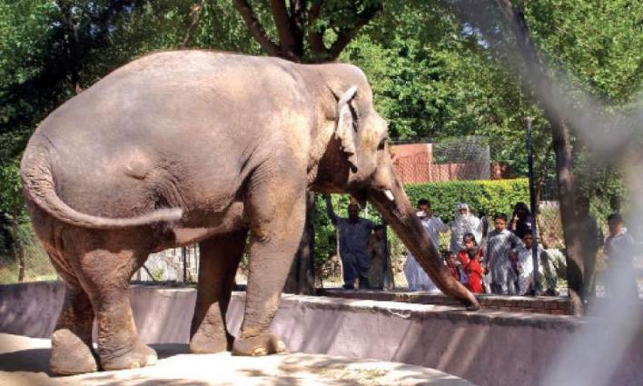 Marghazar Zoo to be expanded, upgraded: Tariq Fazal