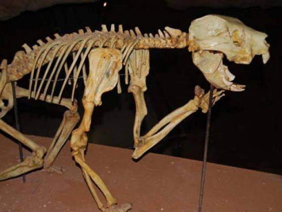 Ancient Australian flesh-eating marsupial discovered