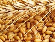 French wheat output headed for 30-year low