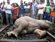 Four elephants killed by Sri Lankan train