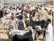 Sale-purchase of sacrificial animals in full swing in twins citie ..