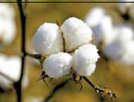 MinTex starts pest, crop management training programme for cotton ..