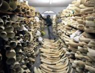 Namibia, Zimbabwe lose vote to allow ivory trade: CITES
