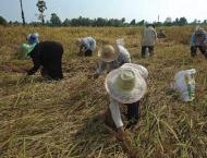 Thai junta reaches out to rice farmers with subsidy