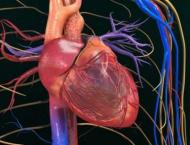 Scientists control heart cells with laser
