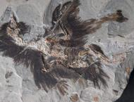 Chinese archeologists find clues about appearance of early birds, ..