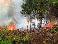Fire erupts in Upper Dir forest