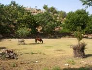 Rehabilitation work on Sheikhbuddin national park underway: DFO
