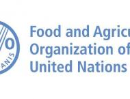 Global food prices fall for fifth year in a row, but economic unc ..