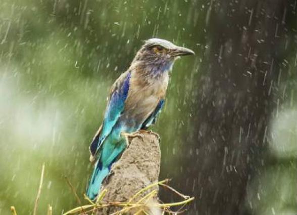 City receives first rain
