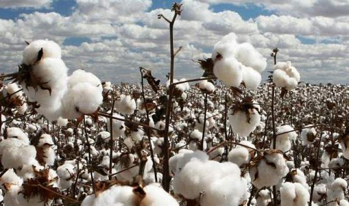 10.3m cotton bales reach ginneries, arrivals up by 11pc