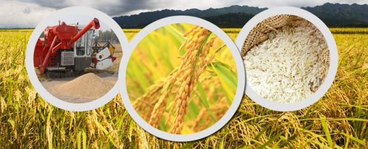 New administrative structure of Agri Dept launched