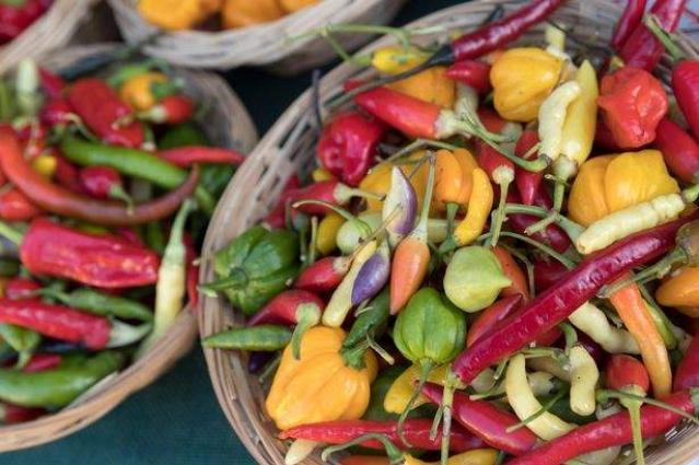 Chillies could be used to destroy cancer