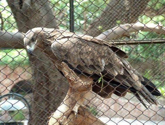Lahore Zoo becomes more attractive after new breeding