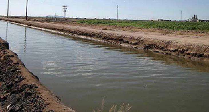 Project to produce fish in saline & brackish water in progress