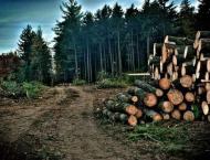 Deforestation- a life at brink