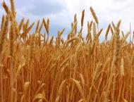 """Awardees of """"Grainfield"""" status asks to prepare agreements by Jul .."""