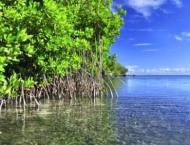 UN launches roadmap towards water sustainability in NENA region