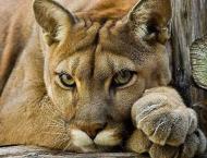 Lahore Zoo celebrates World Tigers Day