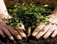 Commissioner chairs meeting on tree plantation drive