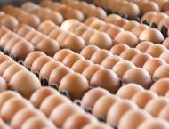 Dutch ministers quizzed over tainted egg scandal