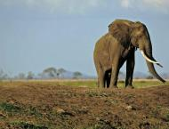 Two killed by elephants in southern Tanzania.