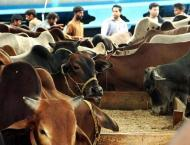Livestock dept distributes 230 animals among poor widows