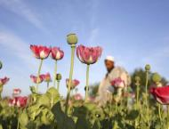 Afghanistan opium production jumps 87 per cent to record level: U ..