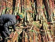 Cabinet directs provincial govts to ensure payments to sugarcane  ..