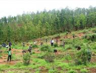 Rs 3mln saplings to be planted in tree plantation campaign in GB