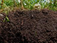 Soil analysis must to improve soil fertility