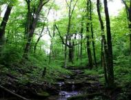 Climate change linked to more flowery forests: Study