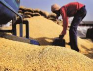 China stands firm on grain production target