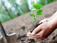 245,000 saplings to be planted in Sukkur