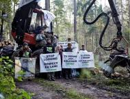 Poland illegally logged in ancient forest: EU court advisor