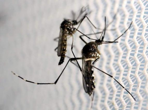 125,000 houses registered to control dengue in MCR area