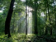 Govt. committed to bring forest cover to 12%