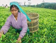 Sri Lanka launches global marketing for Ceylon Tea