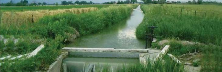 Punjab Irrigation and Drainage Authority decides to hold election of farmer organization