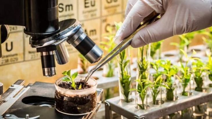 New breeding technologies successful to grow salt resistant crops